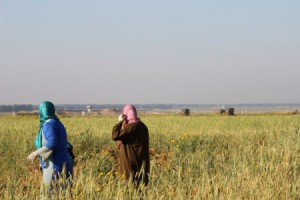 Gaza Farmers (image from ISM)