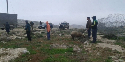 Flock of sheep seized (image from PNN)