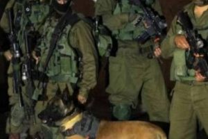 Hebron niight soldiers dog