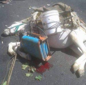 injured_donkey