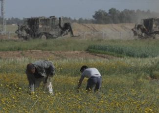 Farmers near the border in Gaza. (Shourideh C. Molavi and Ain Media Gaza)